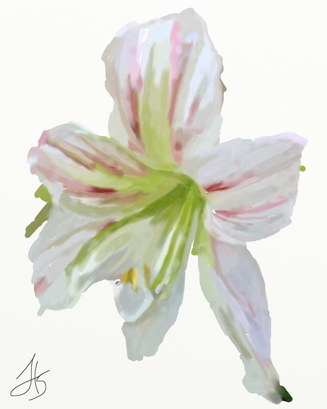 Day 762 Their Flower